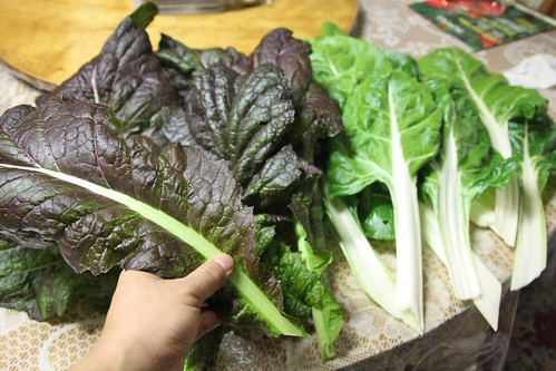 Harvested Red Giant Mustard and Swiss Chard
