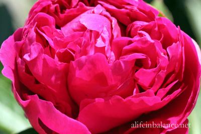 garden_blooms_6