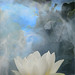 White Lotus Flower Surreal Series - DD0A7245-1000