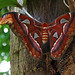 Small photo of Moth
