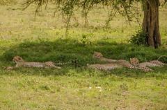 Tanzania-Masek-SafariDrive-122