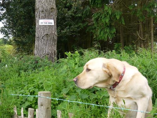 Boo - The friendly Guard Dog