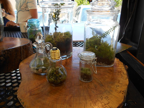 Learn how to create a terrarium like one of these!