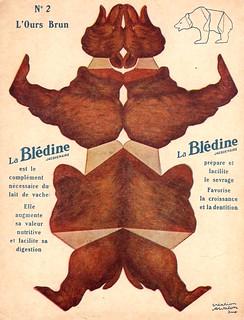 bledine ours brun