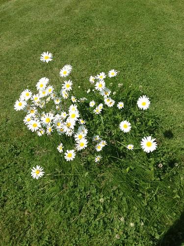 Sweden wildflowers