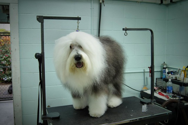 Perfection Dog Grooming Burscough