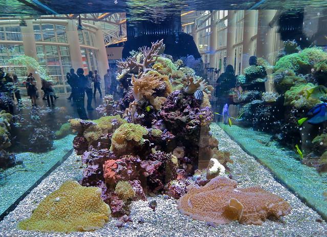 Bloomberg Aquarium Nyc Flickr Photo Sharing