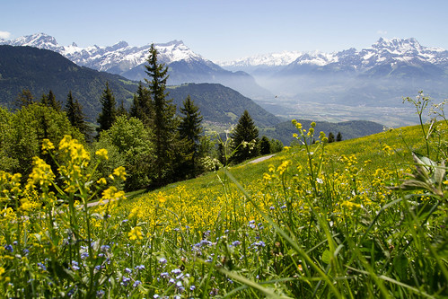 summer mountain alps montagne alpes switzerland suisse prairie vaud leysin