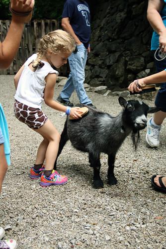 Goats_Baby-goar