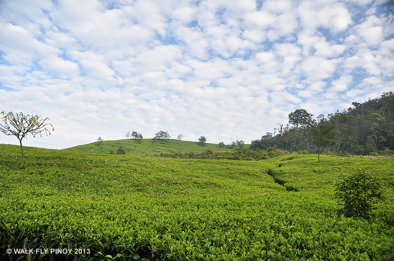 Kawah Putih, Bandung, West Java, Indonesia