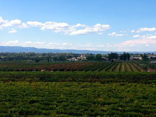 vineyards guanajuato viñedos