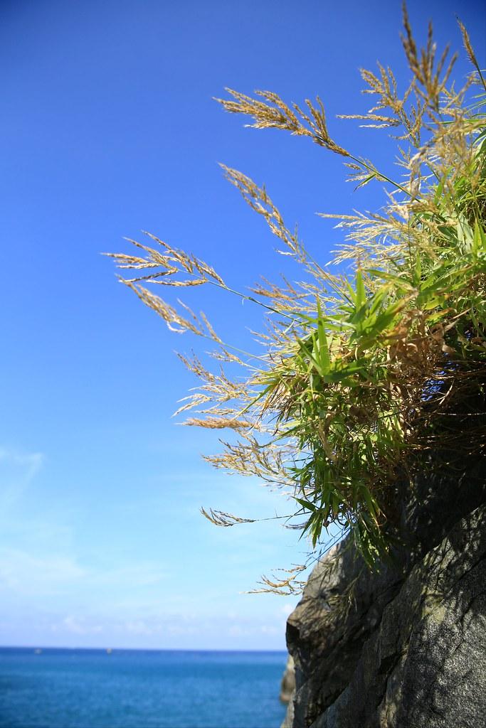 再訪美麗東岸  粉鳥林漁港