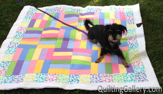 Milo with the Jelly Roll Jam quilt