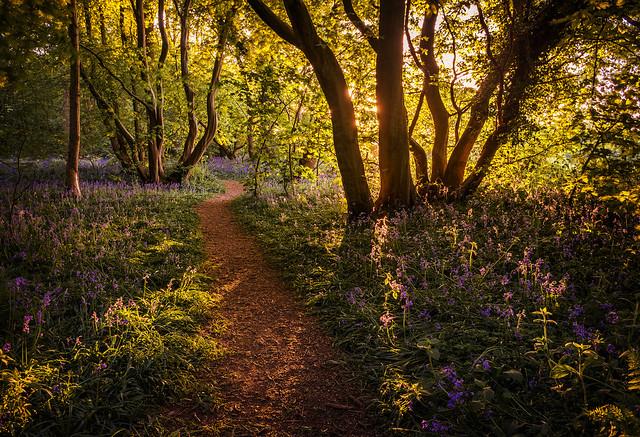 Buckenham Wood Norfolk