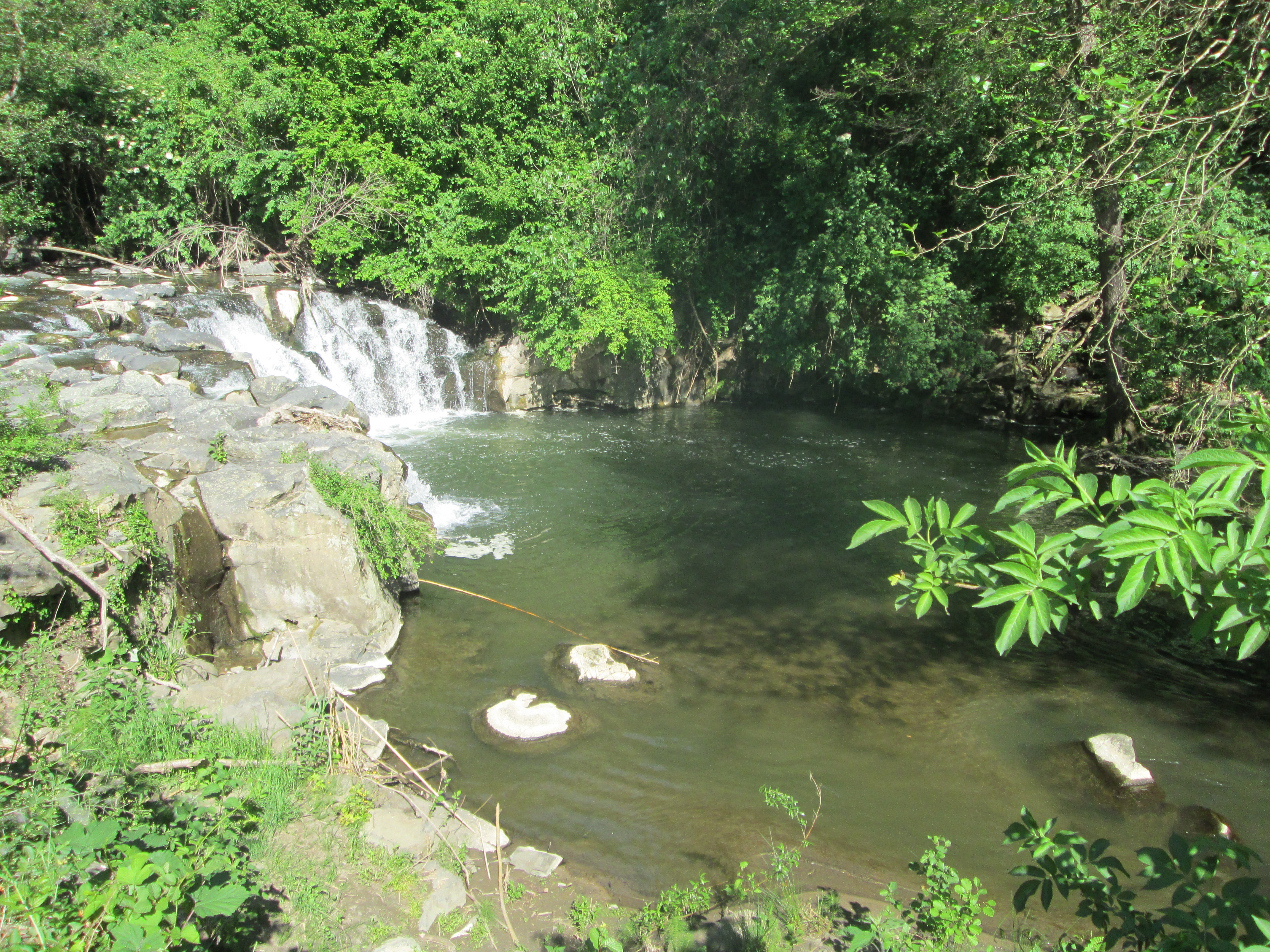 European Natural Soaking Society: Fabled