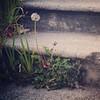 Stairway dwellers, 5/22/15