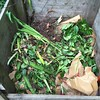 Compost: it's like feast or famine with the carbon over here.