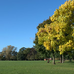 Leaves changing colour at Haslam Park, Preston