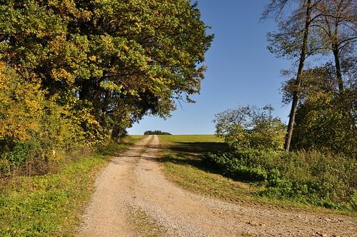 Feldweg in der Herbstsonne