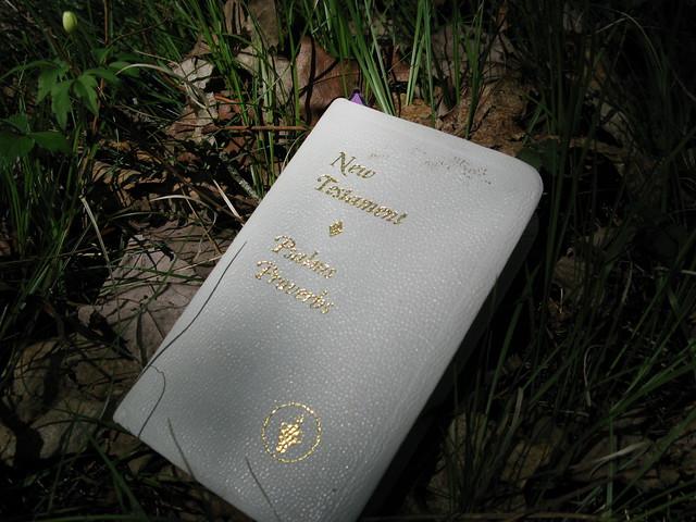 Pink Beds Bible