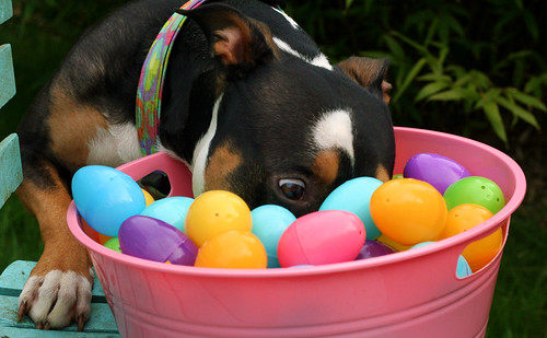 "160. ""Easter"" - Easter means different things to different people and dogs. Take a picture that celebrates Easter in some way if you do, and if you don't, show us how you and your dog spent the day. You can go for something cute, funny, religious, or symb"