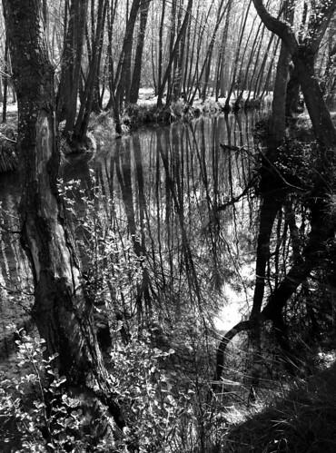 reflejos en blanco y negro