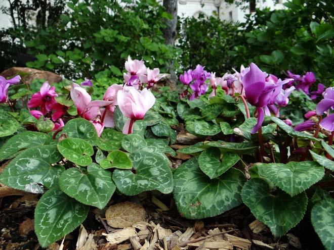 Hearst Castle gardens 12
