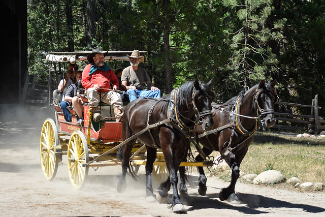 Stagecoach, Wawona, Yosemite National Park