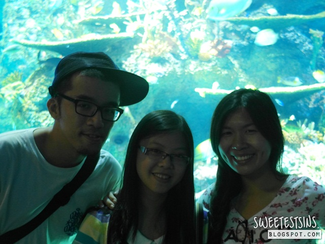 sea aquarium marine life park resort world sentosa singapore (28)