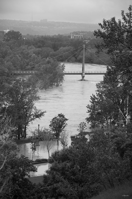 Calgary Flood 2013 - Day 2: water through trees