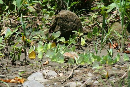 黃蝶翠谷是美濃平原的重要水源,其生物多樣性與歷史文化極具保存價值。李慧宜提供。