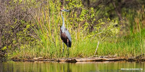 Kenya - Lake Baringo 20