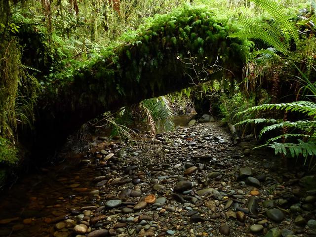 Rainforest Stream, Grey Valley