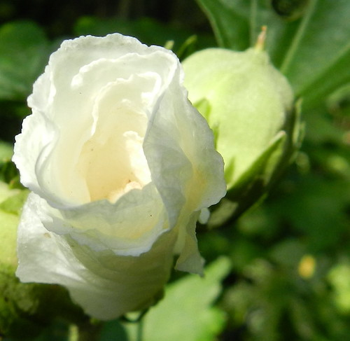 todayflowersDSCN1541