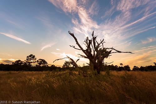 sunset tree clouds deadtree prarie satesh peaceinart miramarpinelands