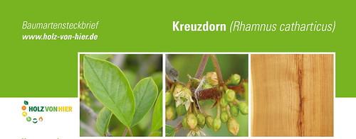 Kreuzdorn-Header