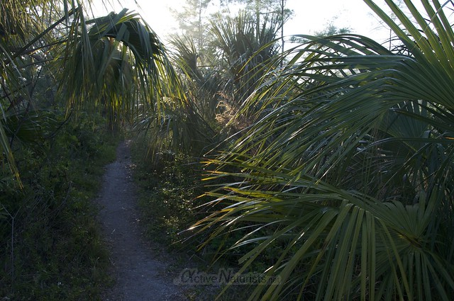 view 0003 Gator Hook Trail, Big Cypress National Preserve, Florida, USA