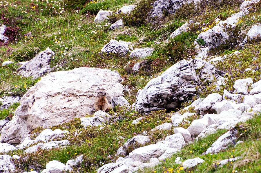 Tuenno, Trentino, Trentino-Alto Adige, Italy, 0.013 sec (1/80), f/8.0, 2016:07:01 11:34:02+00:00, 300 mm, 70.0-300.0 mm f/4.5-5.6