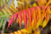 Autumn In Springdale