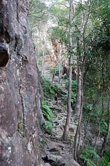 Track up Mt Ngungun