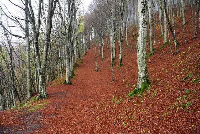 Foreste casentinesi, Tuscany, November 2016 074