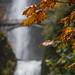 Multnomah Autumn by Nicholas_Steven_