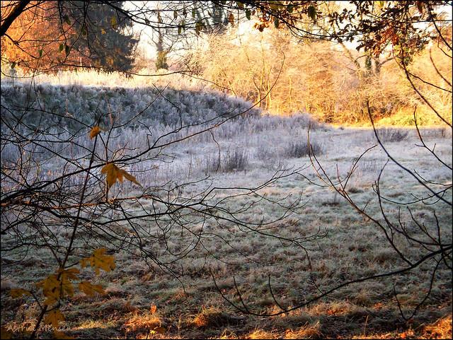 Een mooie ochtend...., Nikon COOLPIX S50c