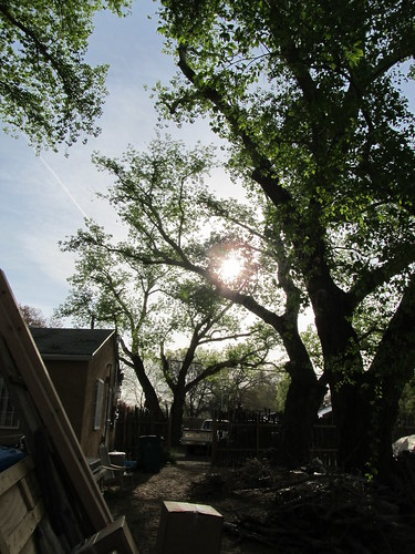 sunrise through the newly-cleaned up tree canopy