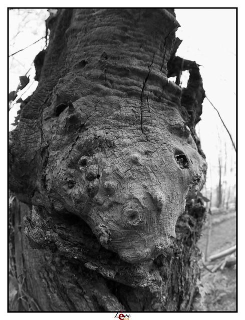 Le peuple de la forêt - Page 4 6935202246_2237508b8d_z