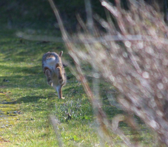 7059752851 7862afdc98 z March Haiku / March Hare