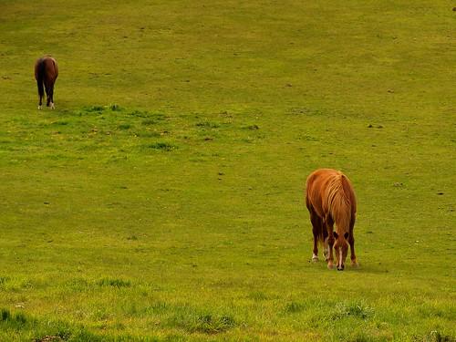 horse ontario canada field schomberg