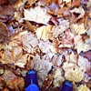 Carpet of leaves #autumn #melbourne #richmond #igers #mobilephotography #leaves #instamelbourne #igersmelbourne  #iphonography #iphoneonly #ig #instagood  #instaozzie #instralia    #streetphotography #streetsofmelbourne