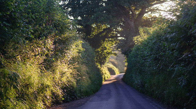 sunrise on a Dorset lane