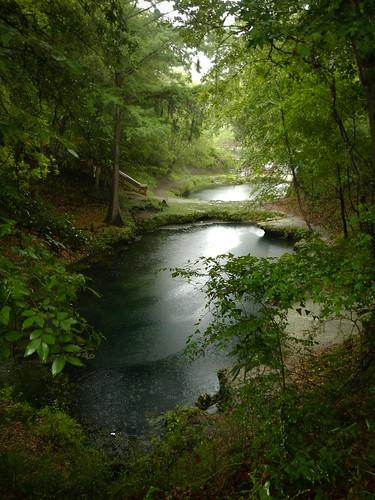 water rain forest spring overcast springs swamp splash freshwater suwannee lafayettebluesprings